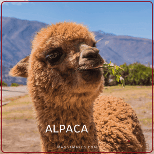 Alpaca in a valley